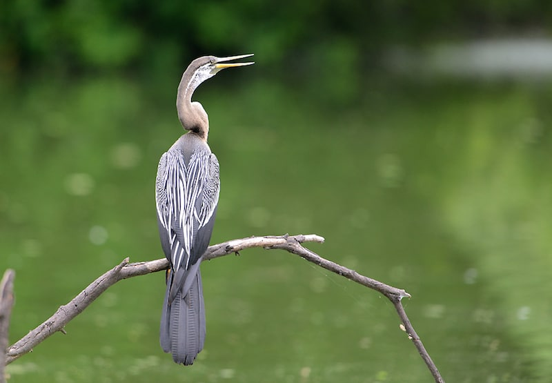 Bharatpur Bird Sanctuary.jpg