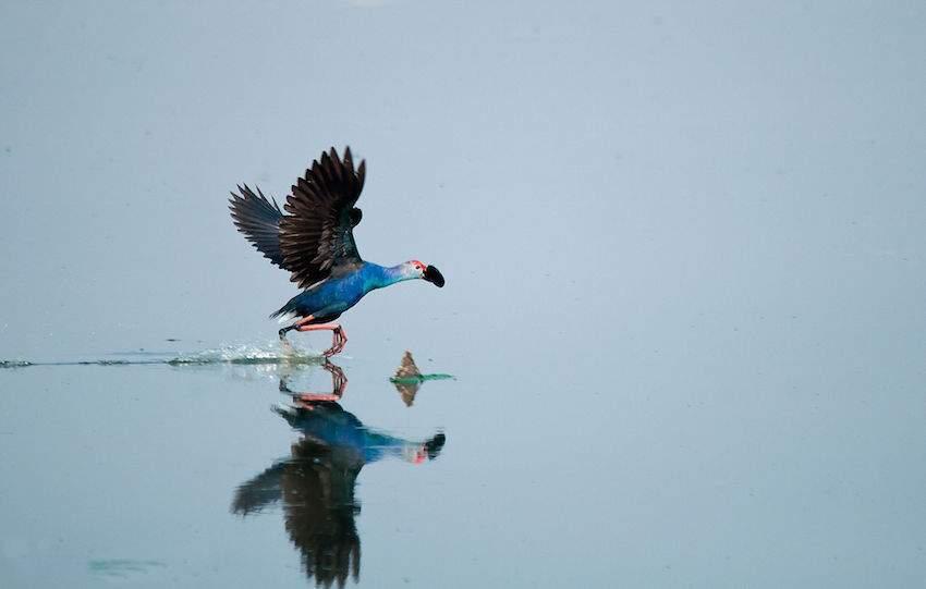 Bird in Sanjeevaiah Park.jpg