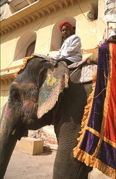 elephant ride jaipur.jpg
