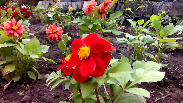 Garden-Summer-Nainital.jpg