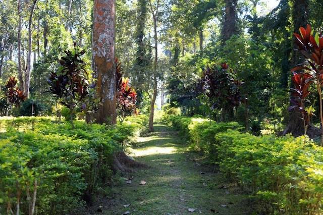 Jokai-Botanical-Garden-Assam.