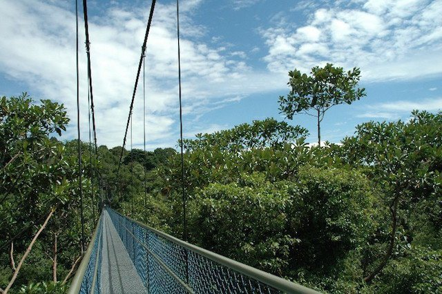 Mac Ritchie Treetop Walk in Singapore.