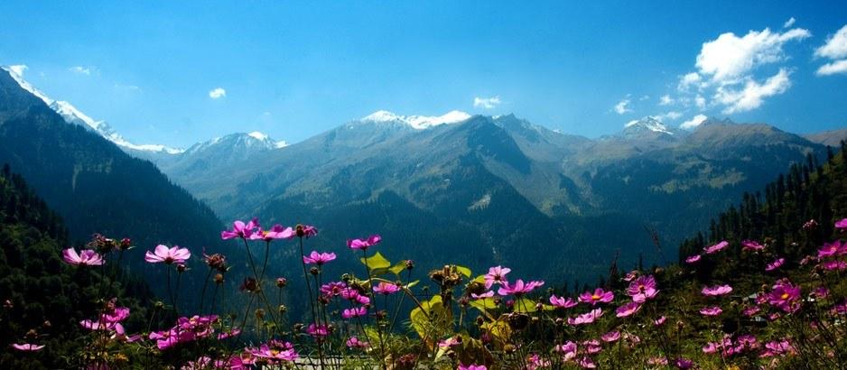 Manli-flowers.jpg