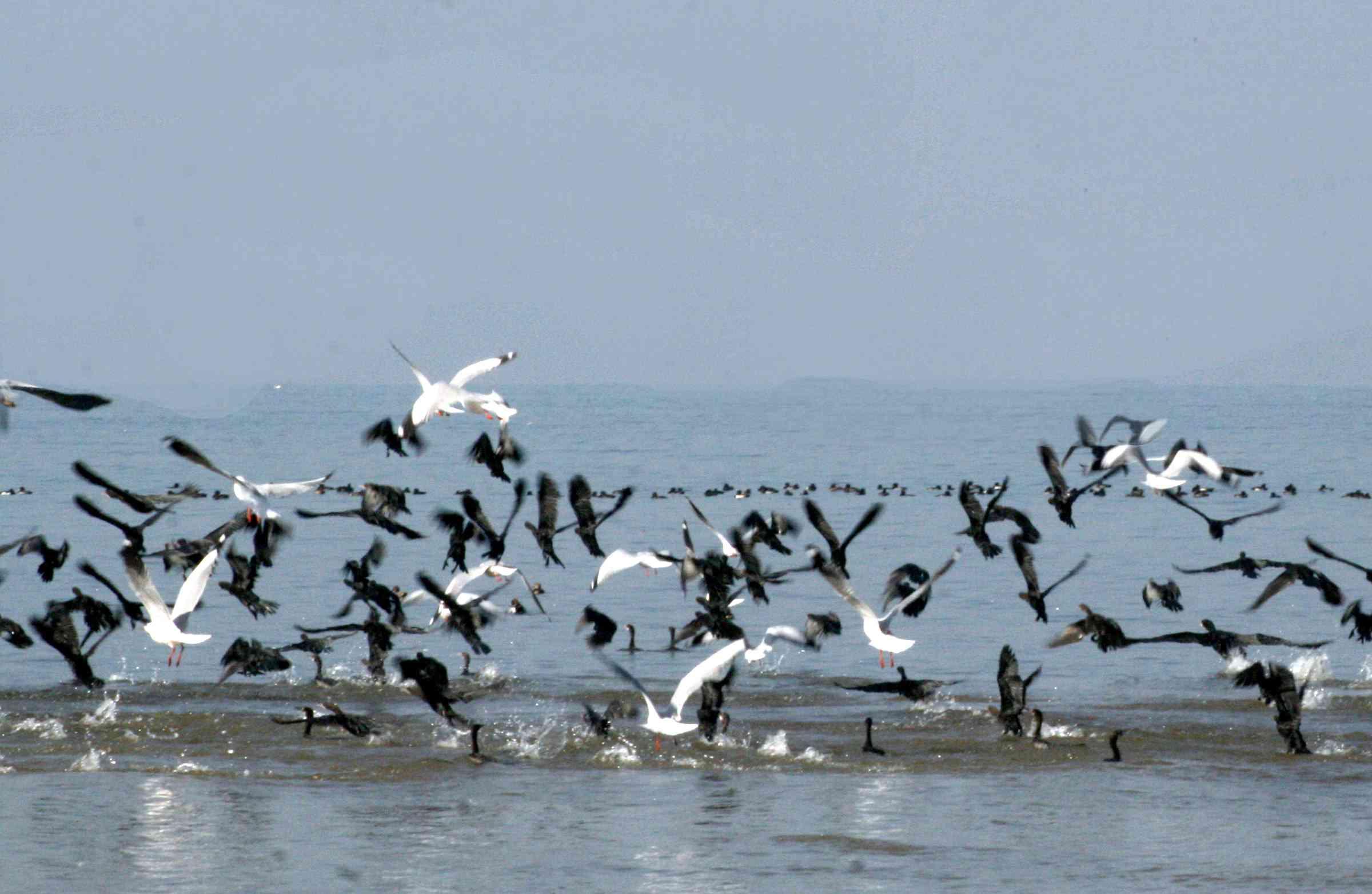 Migratory-Birds.jpg