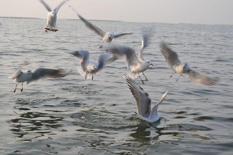 Nal-Sarovar-Bird-Sanctuary.jpg