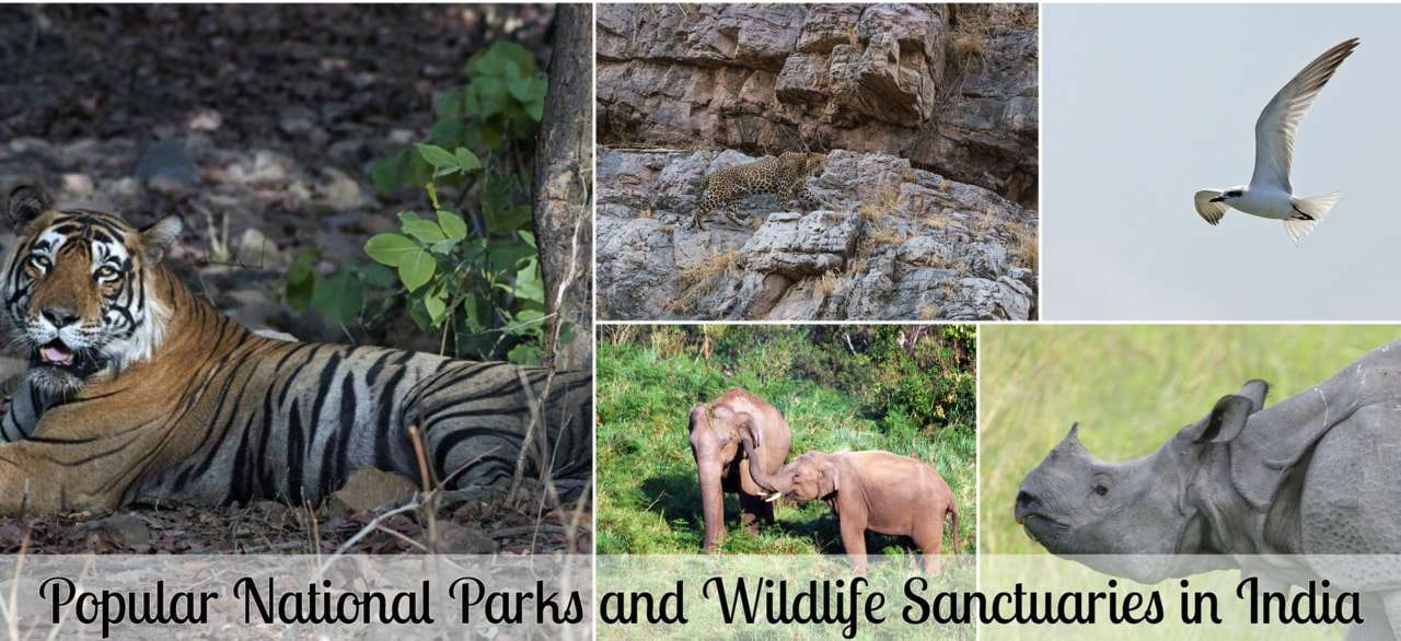 National-parks-and-wildlife-sanctuaries-in-india.jpg