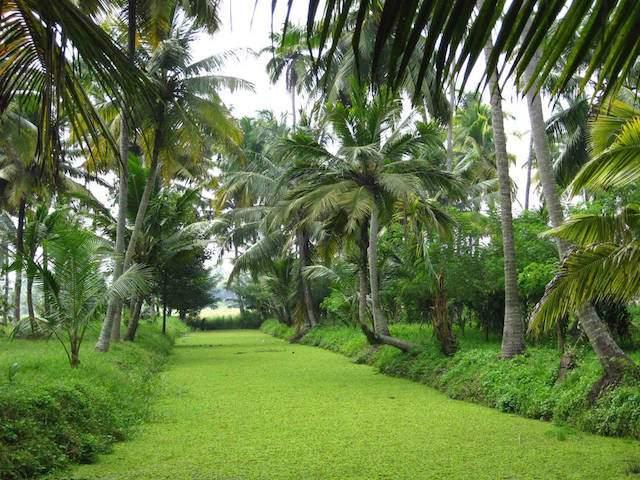 Natural-Beauty-of-Kerala.