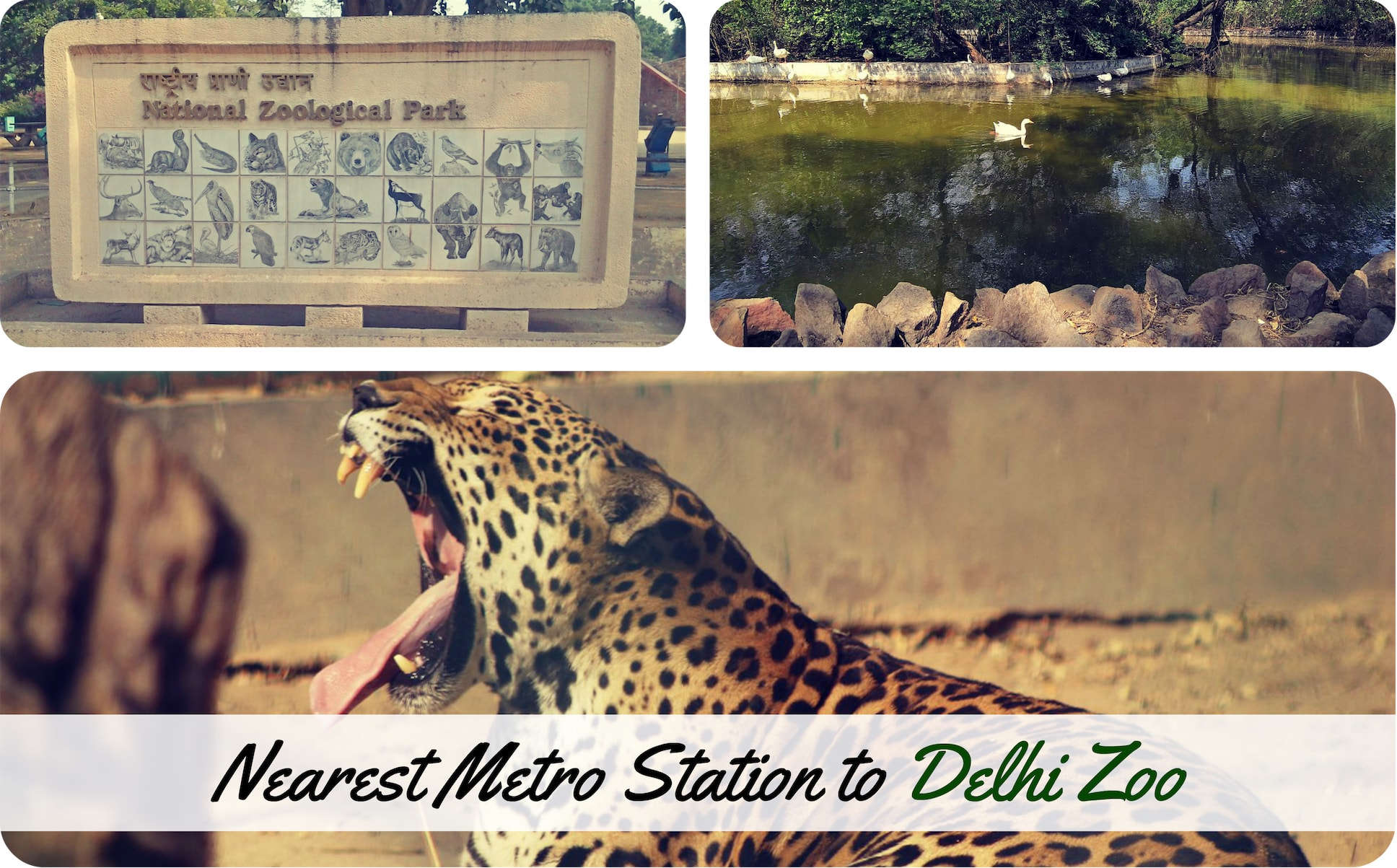 Nearest-Metro-Delhi-Zoo.jpg