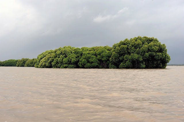 Pichavaram-Mangrove-Forests.jpg