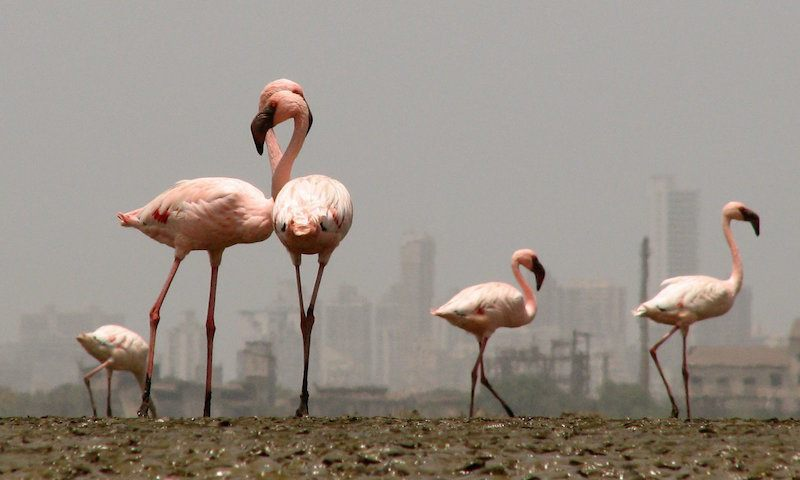 Sewri-Jetty-Flamingo-Point-Mumbai.jpg