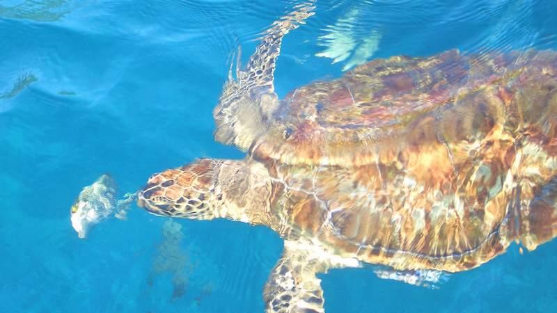 Snorkelling-in-Similan-Island.jpg