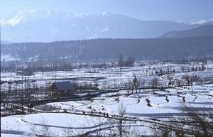 snow-padi-field-gulmarg.jpg