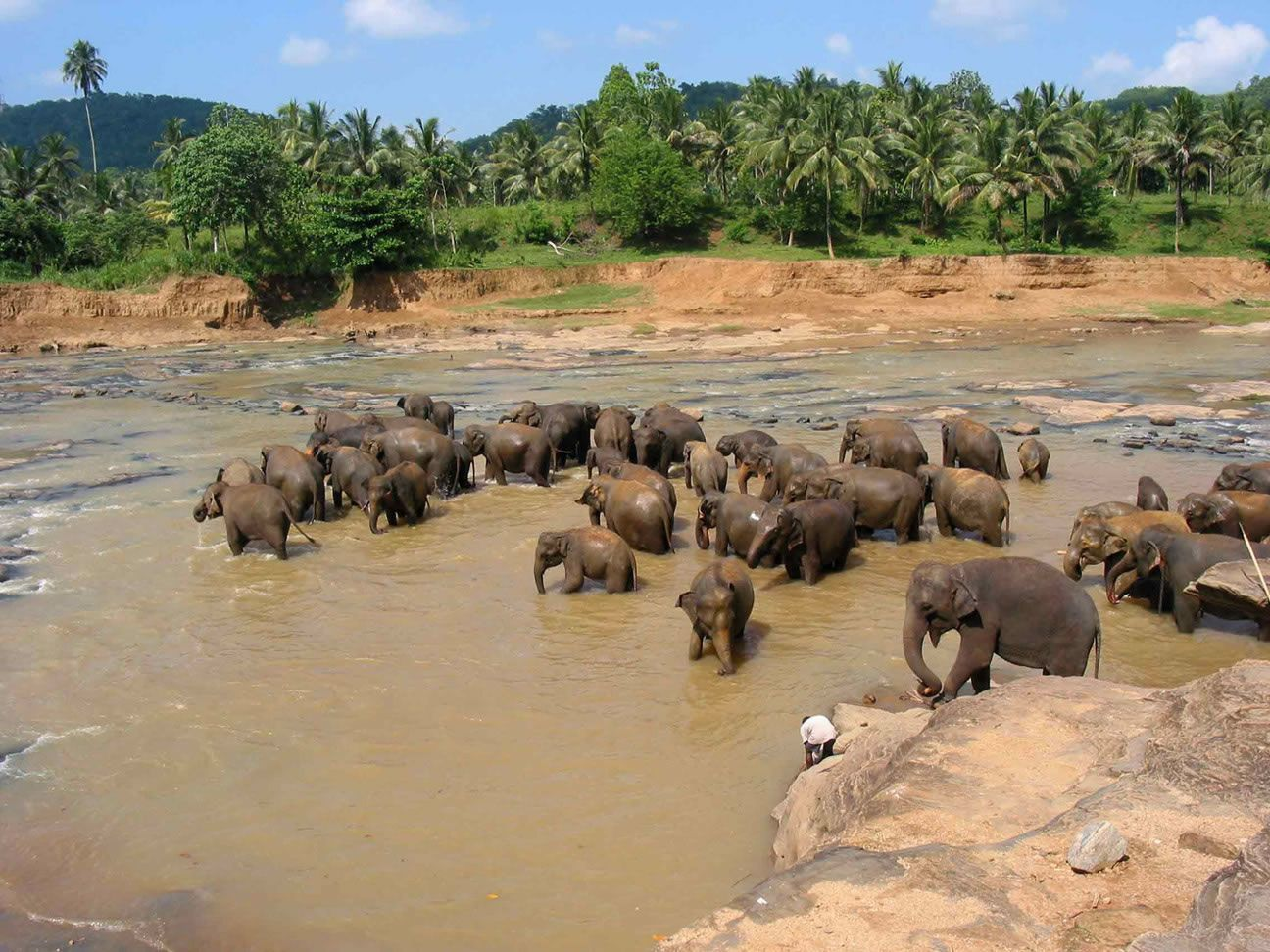sri-lanka-elephants.