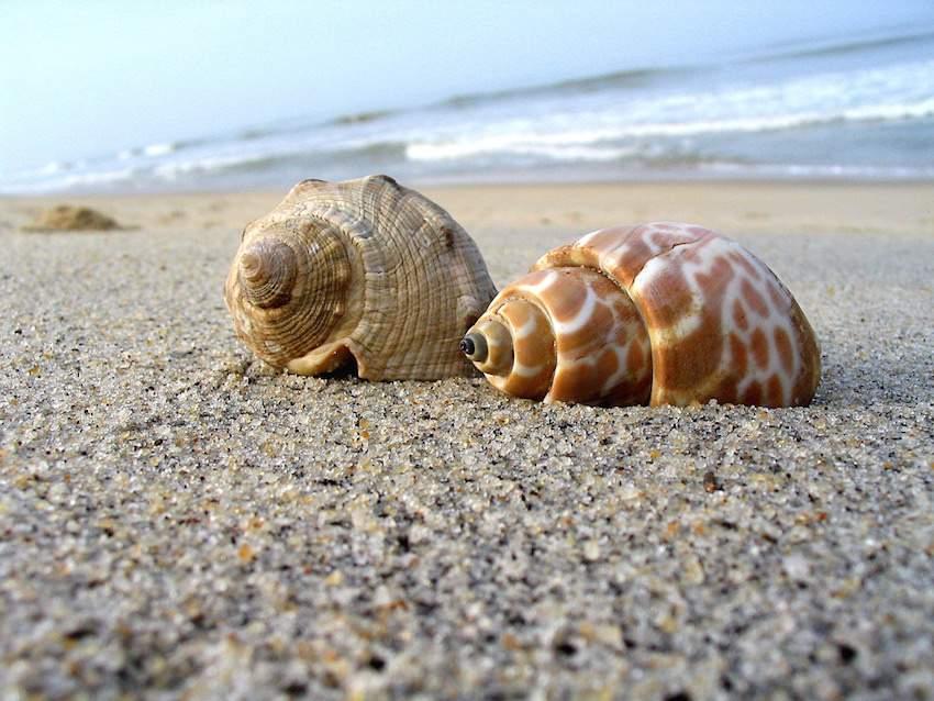 Tannirbhavi Beach.jpg