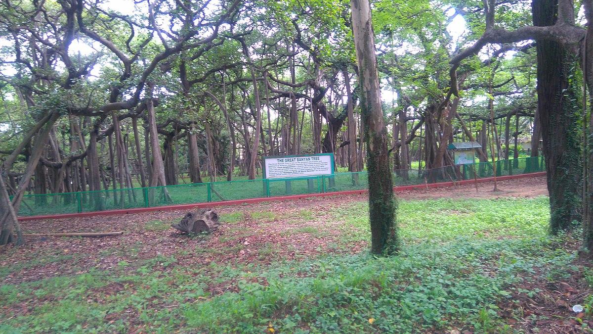 The_great_banyan_tree_of_kolkata.jpg