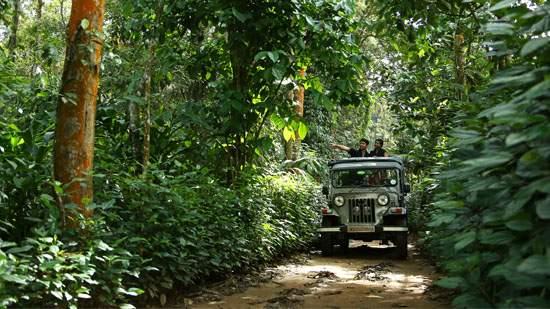 Thekkady-in-Kerala.