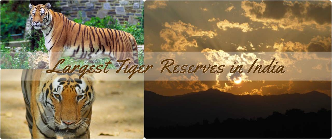 Tiger_Reserve_Largest_India.jpg