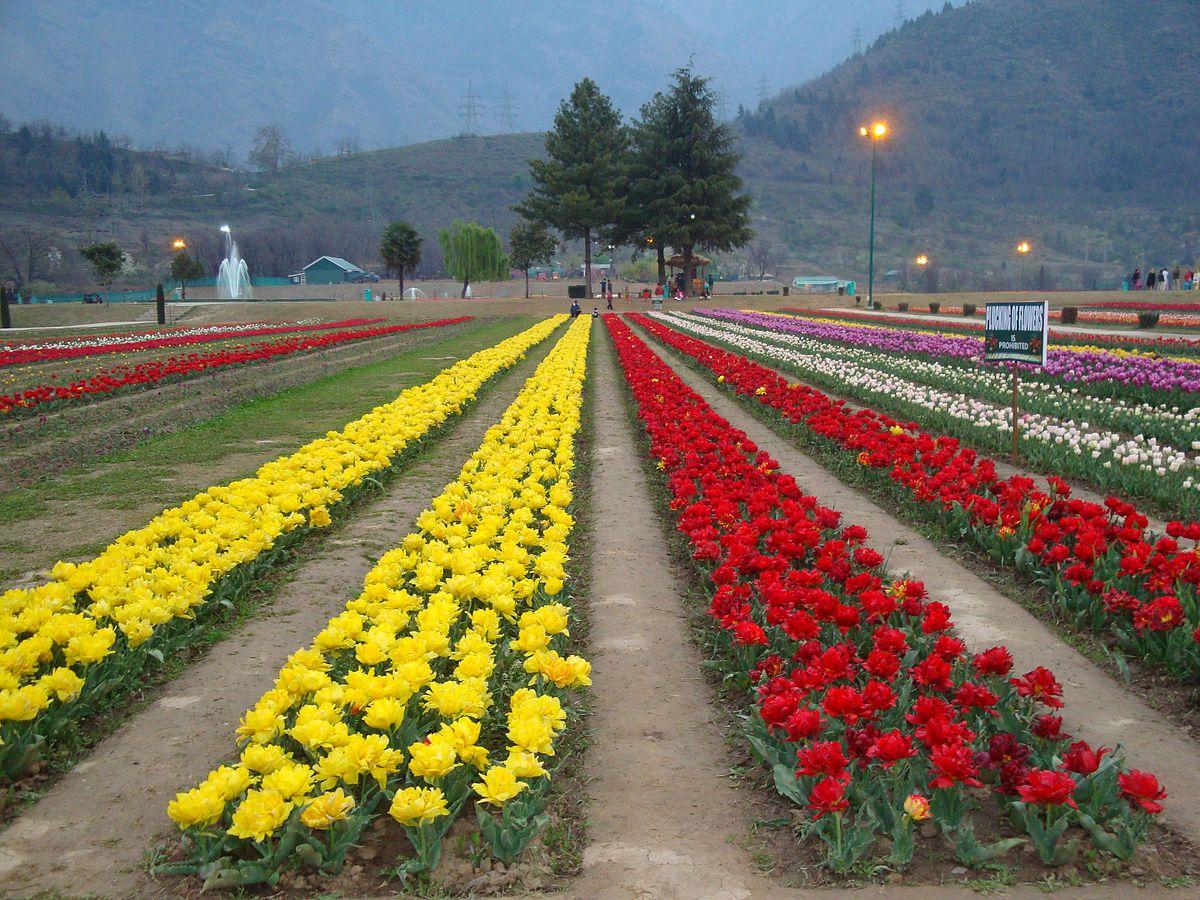 Tulip_garden,_Srinagar.jpg