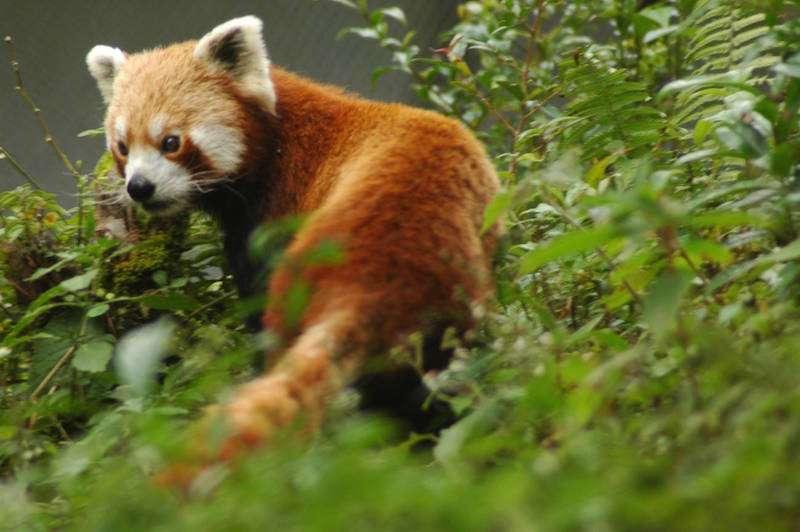 Varsey-Rhododendron-Wildlife-Sanctuary.jpg