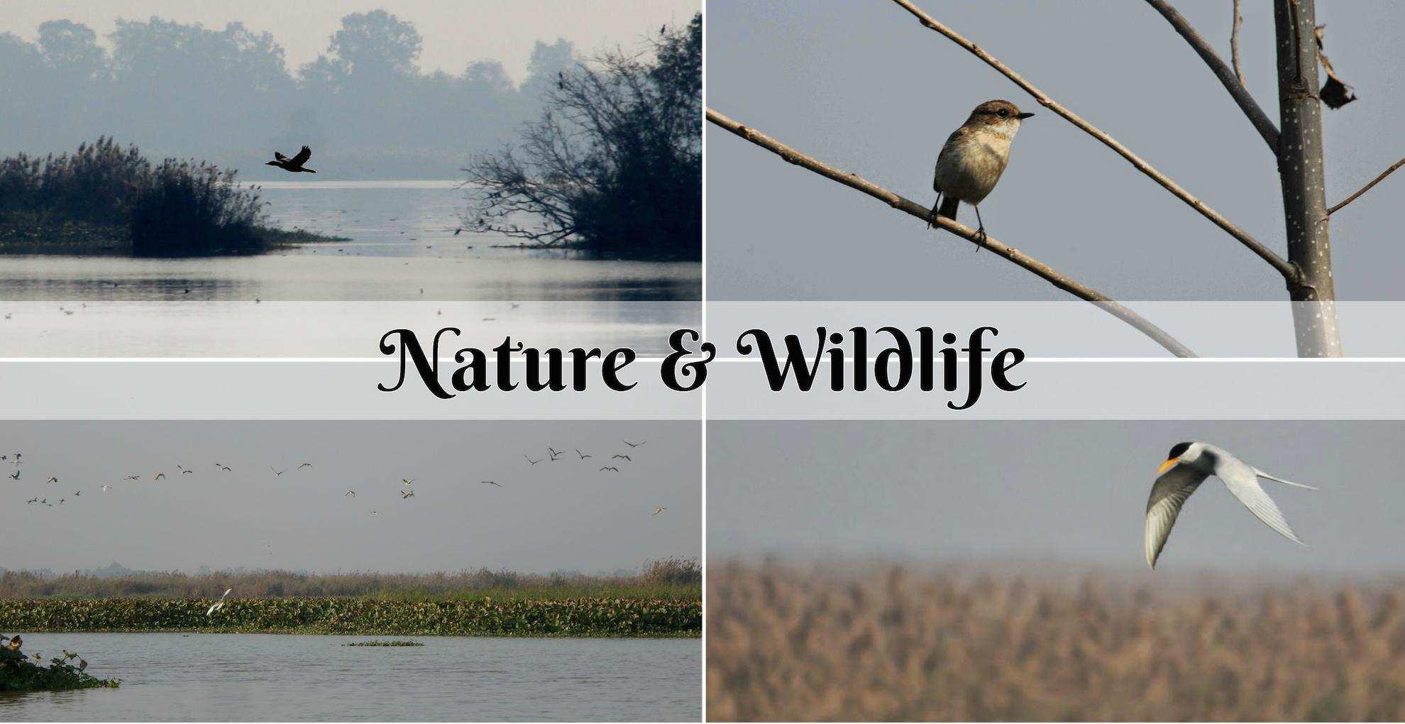wild life at Amritsar.