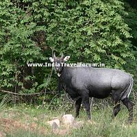 Ranthambore Wild Life