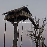 A Traditional Tree House At Meghalaya