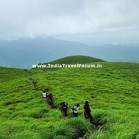 A Trek Through Grasslands