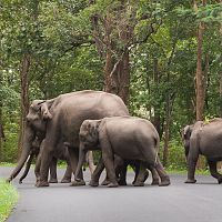An Elephant Family