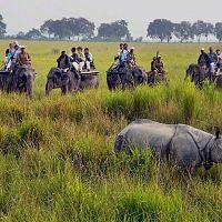 Elephant Safari At Kaziranga - Image Courtesy @Wiki