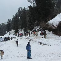 Snow At Kufri - Image Credit @ Wikimedia