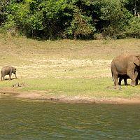 Elephant Family - Image Credit @ Saurabh
